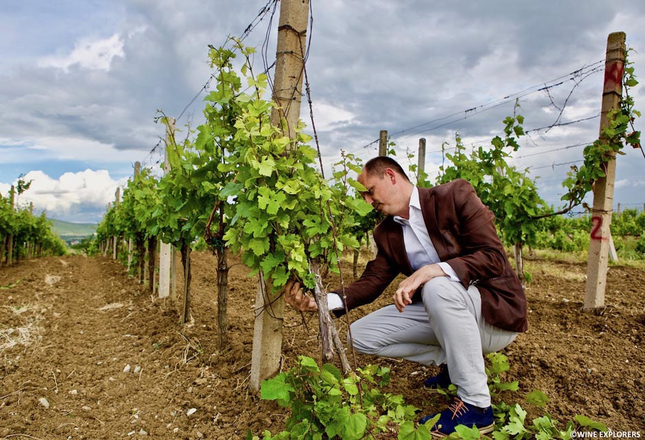 Bodrumi i Vjeter, Enologjia, Kosovo, Rahovec, Sefa Wine, Stone Castle, vin kosovar, Wine explorers, Wine explorer, Jean-Baptiste Ancelot, Voyage, Tour du monde, Vin, Vignoble, Bouteille, Degustation, Wine, Wine travel, Wine inventory, Wine experience, Wine lover, Wine moment, Wine trip