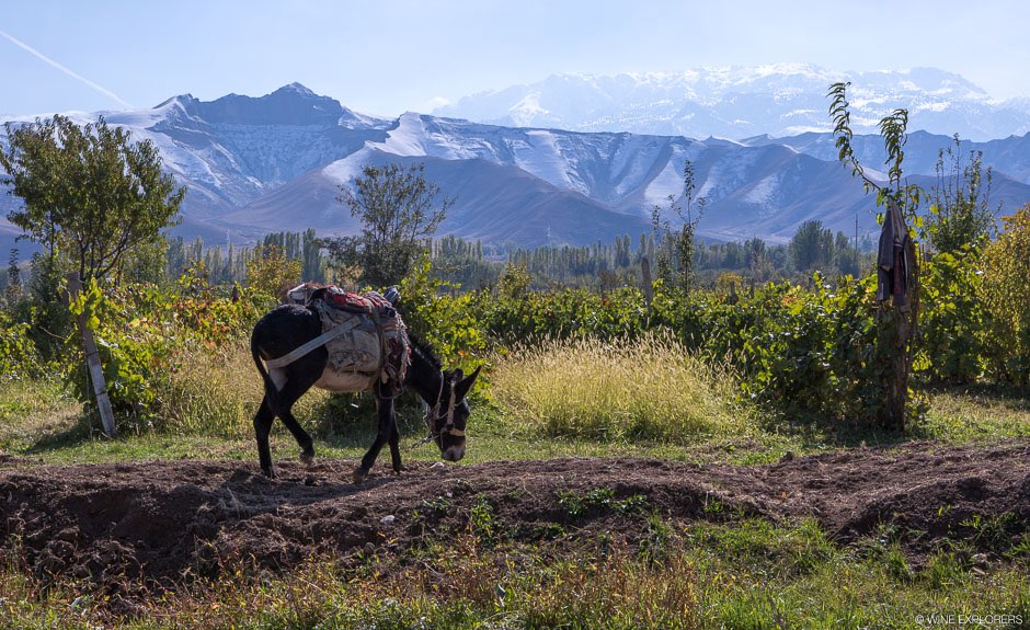 Tadjikistan, Shahrinav, Parandis, Vinzavod Gafourova, Pendjikent, réservoir de Kaïrakkoum, Khodjent, Gorbatchev, saperavi, riesling, cabernet sauvignon, rkat-siteli, Wine explorers, Wine explorer, Jean-Baptiste Ancelot, Voyage, Tour du monde, Vin, Vignoble, Bouteille, Degustation, Wine, Wine travel, Wine inventory, Wine experience, Wine lover, Wine moment, Wine trip, Culture, red wine, white wine, Chardonnay, Merlot, Cabernet Sauvignon, Syrah, Sauvignon Blanc, Pinot Noir, Malbec